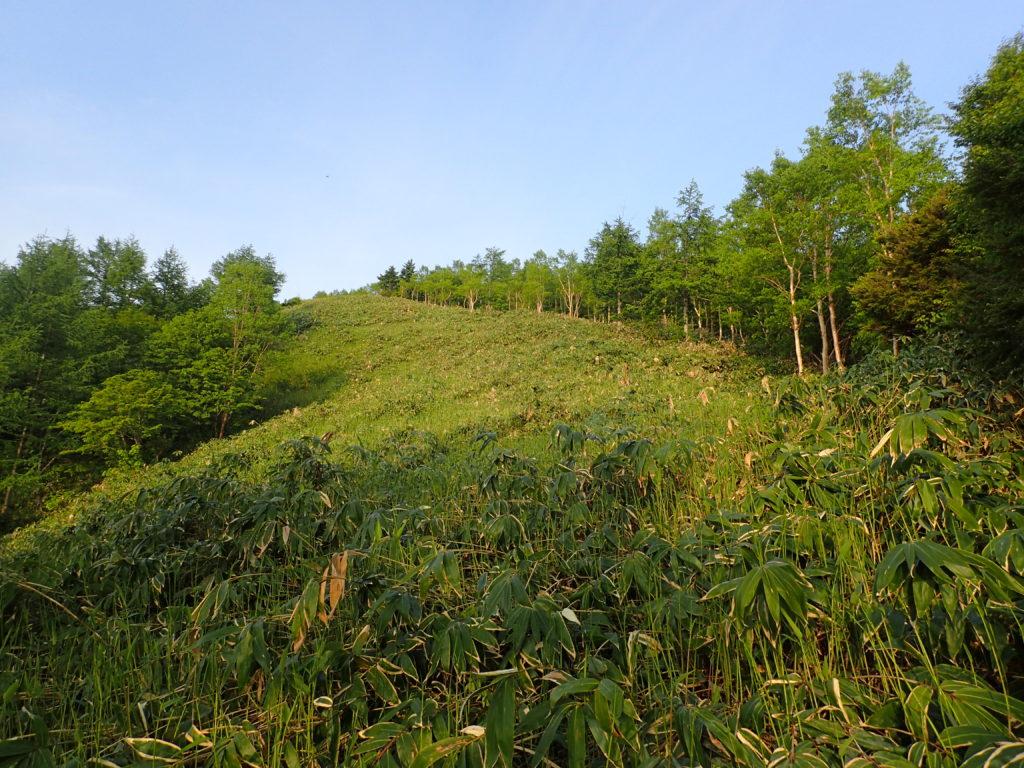 恵那山の広河原ルートの笹