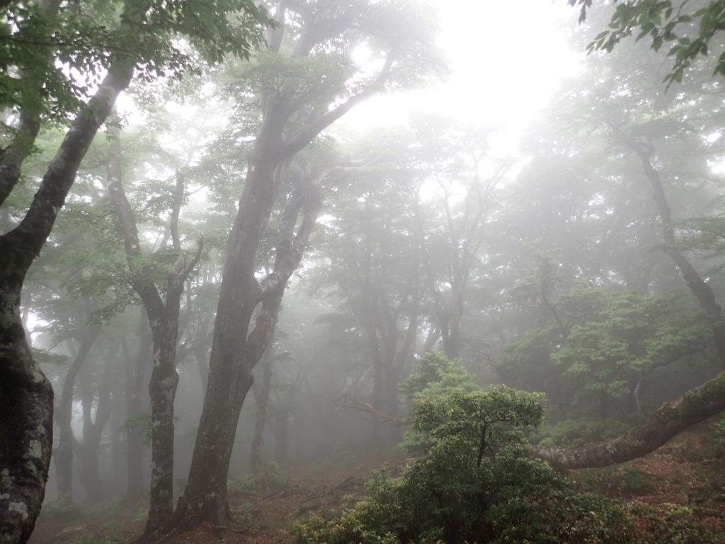 霧の立ち込める天城山登山道