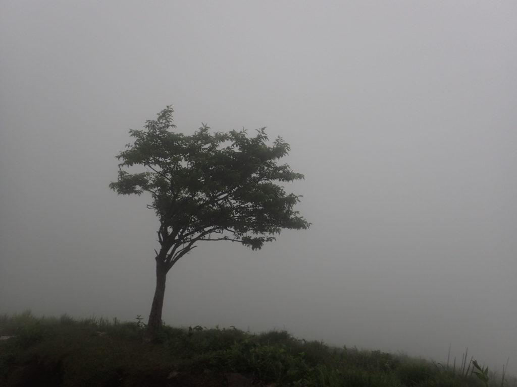 雨のため全く景色が見えなかった伊吹山登山