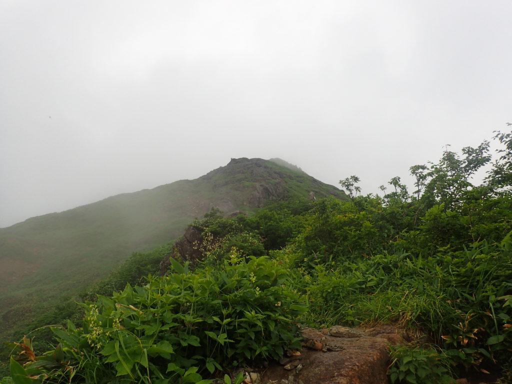 谷川岳の西黒尾根から見上げる山頂方向