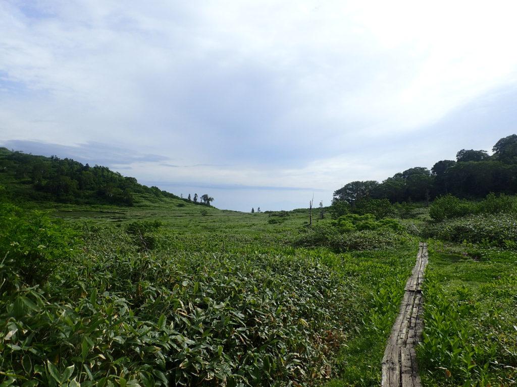 妙高山登山道にある高層湿原と木道