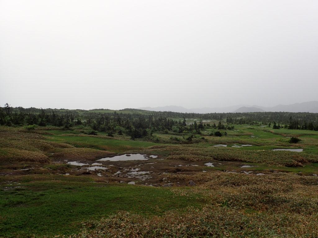 苗場山の高層湿原