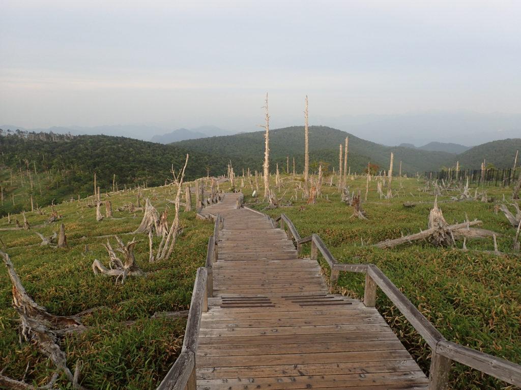 大台ヶ原山の朽木