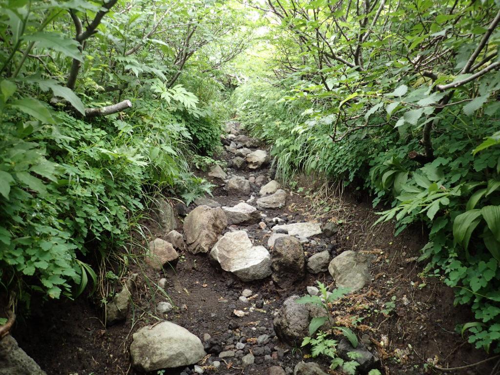 岩手山馬返し登山道