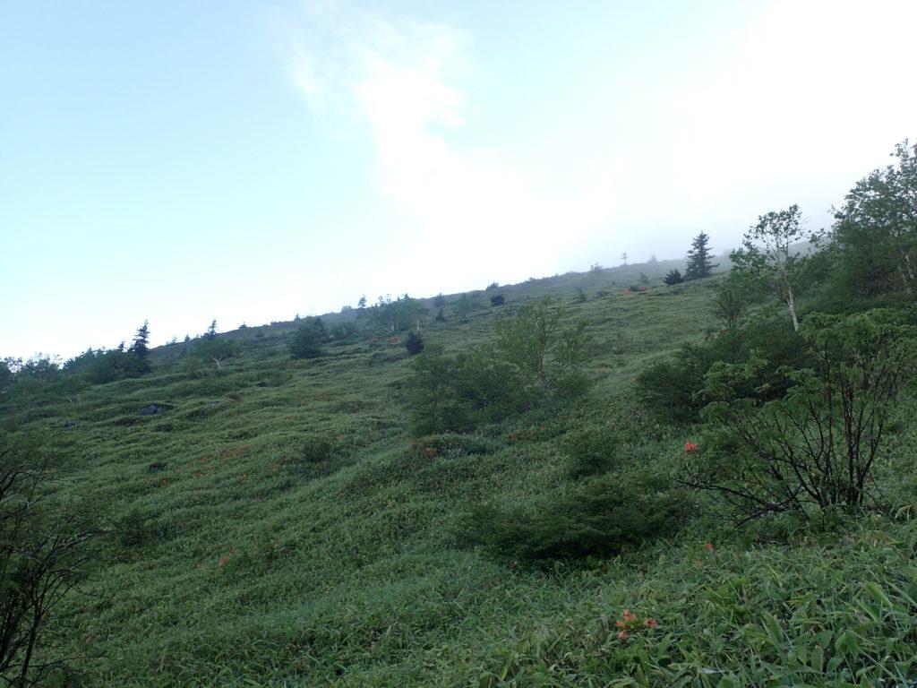 根子岳登山道からの景色
