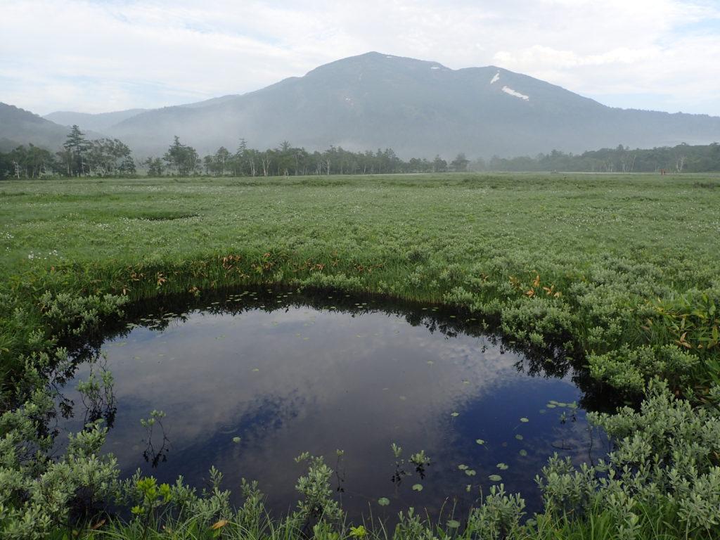 尾瀬の池塘と至仏山