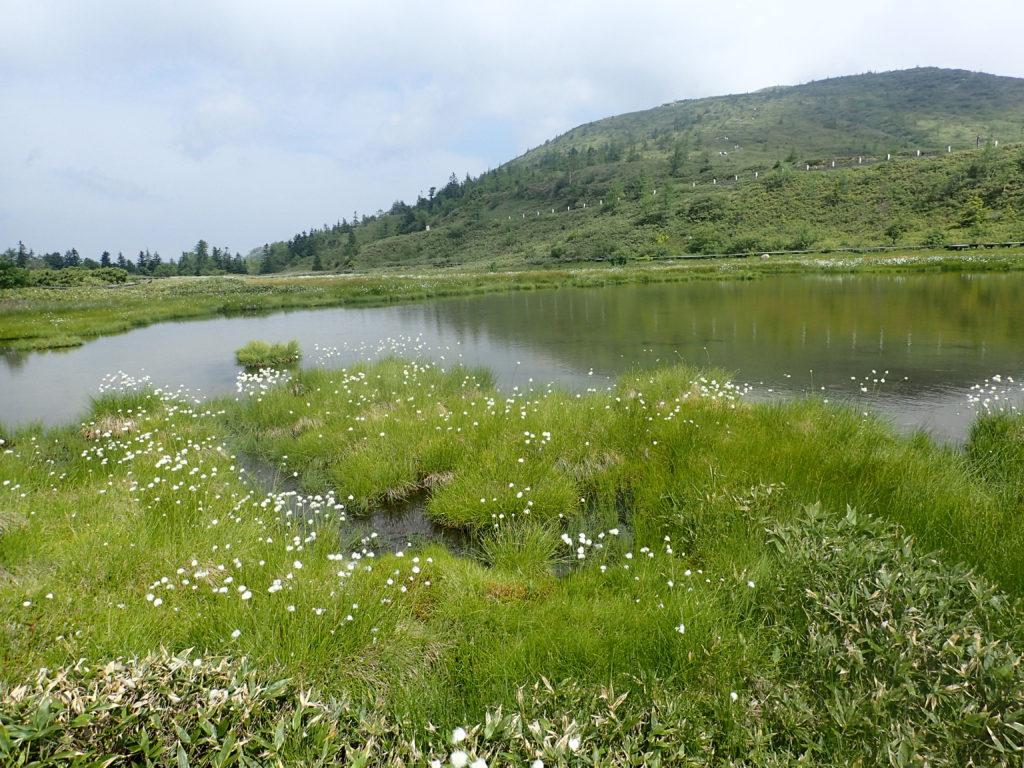 草津白根山の弓池