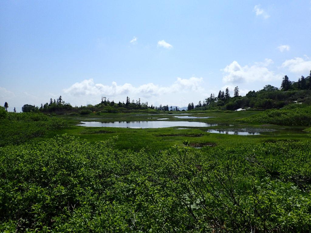 火打山のふもとの高谷池