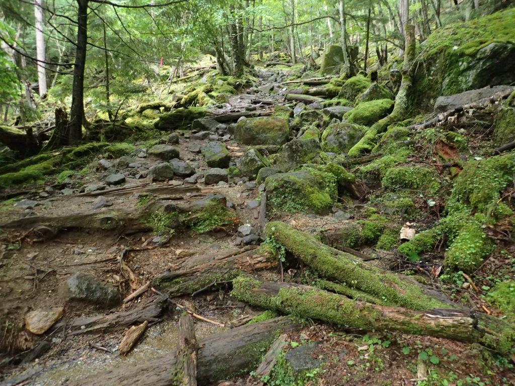 甲武信ヶ岳の千曲川水源地ルートの登山道