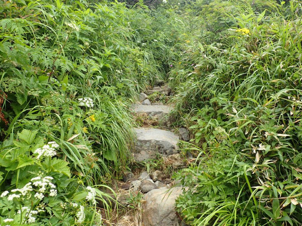 鳥海山のあざみ坂