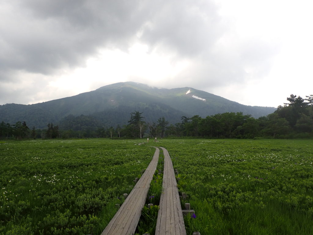 尾瀬の木道から見る至仏山