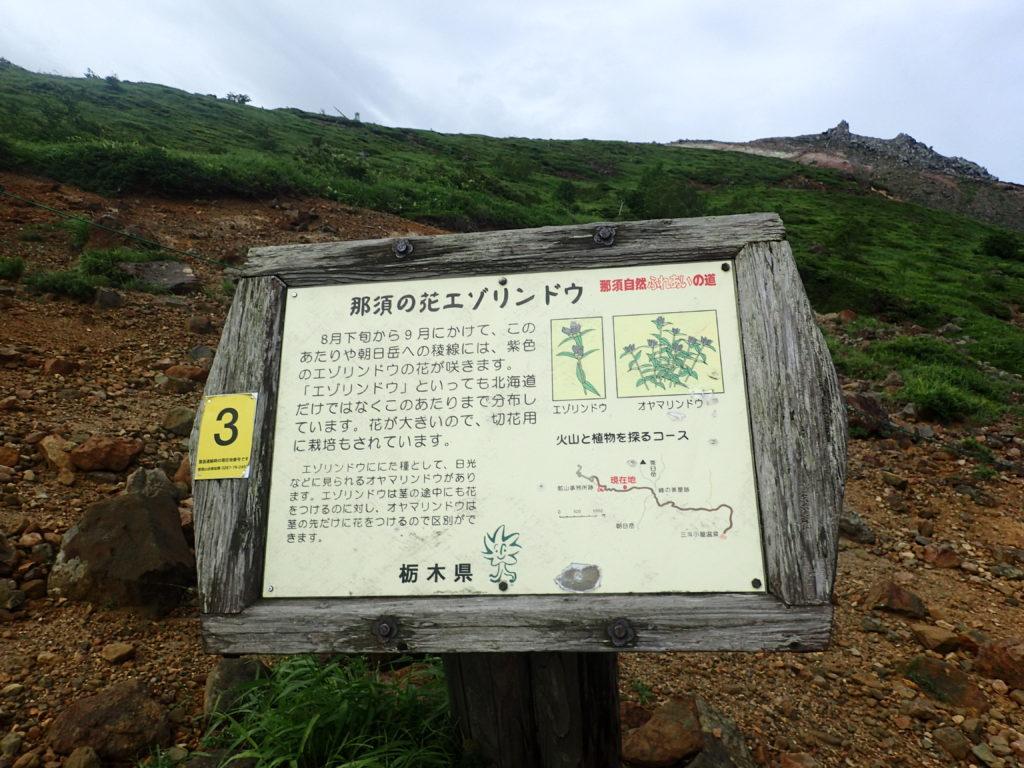 那須岳の峠の茶屋ルートにあるエゾリンドウについての説明看板