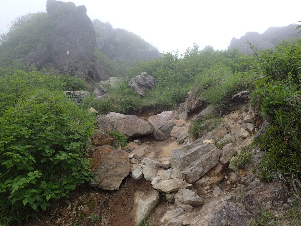 日光白根山の菅沼登山口ルートの登山道
