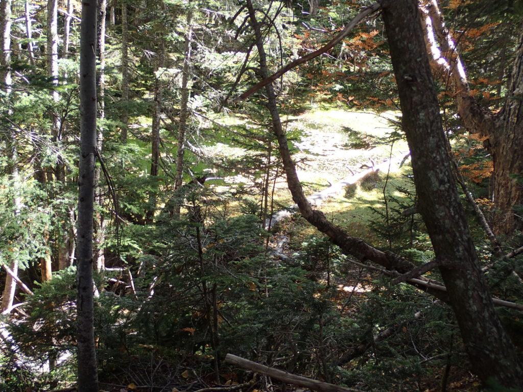 千枚岳登山道の駒鳥池
