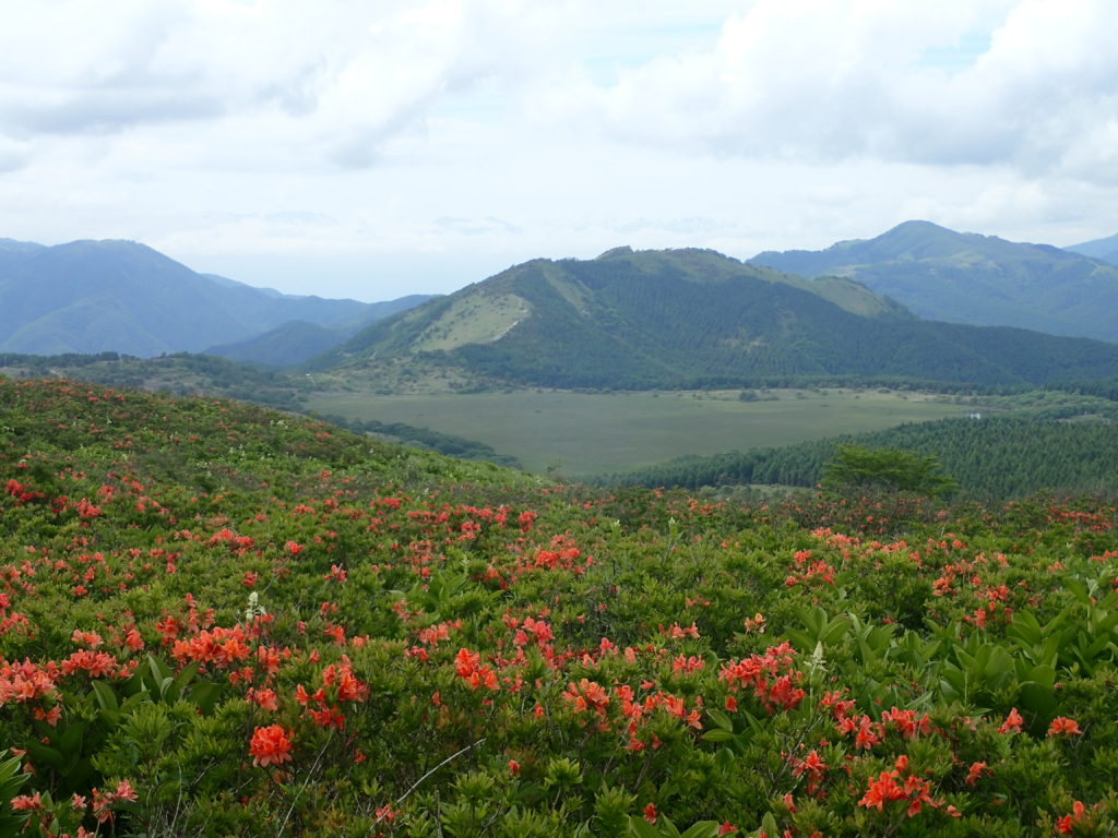 霧ケ峰のレンゲツツジの群生と八島ヶ原湿原と鷲ヶ峰
