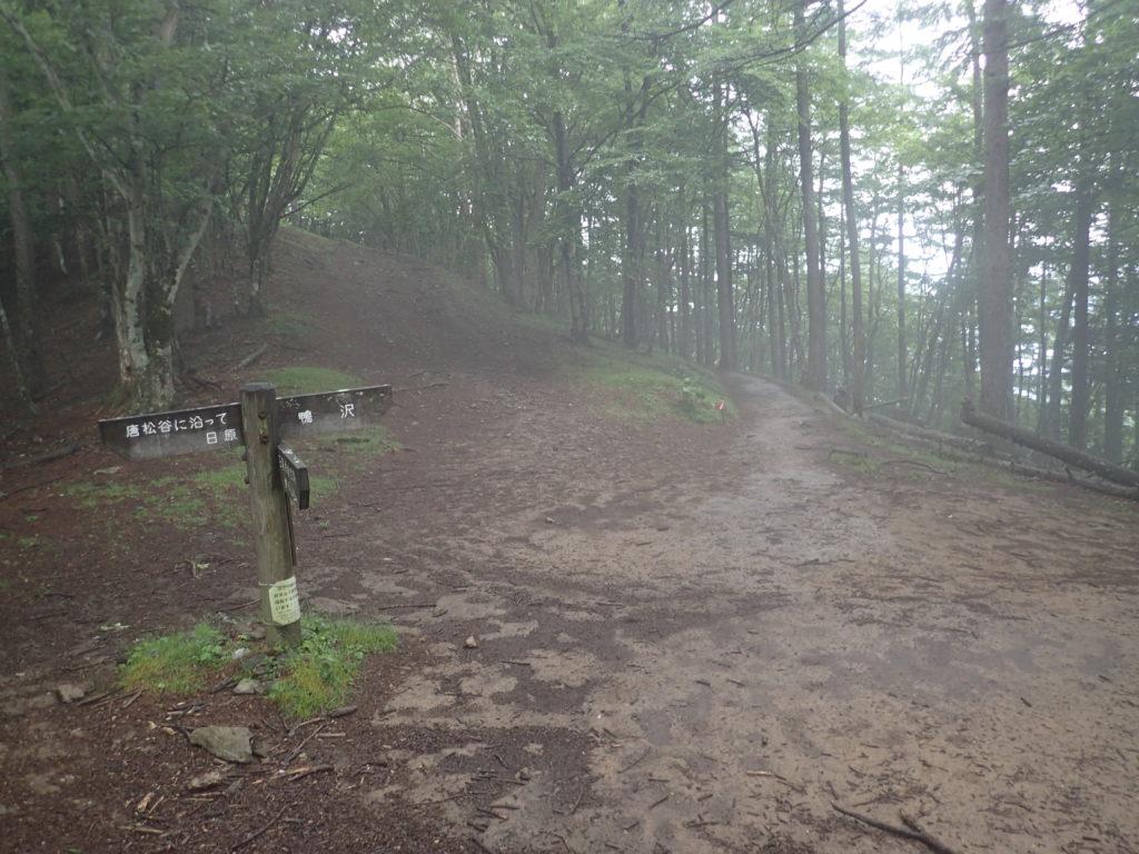 雲取山のブナ坂
