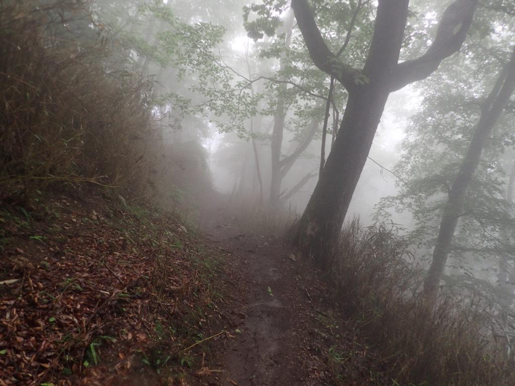 霧が立ち込める雲取山鴨沢登山道