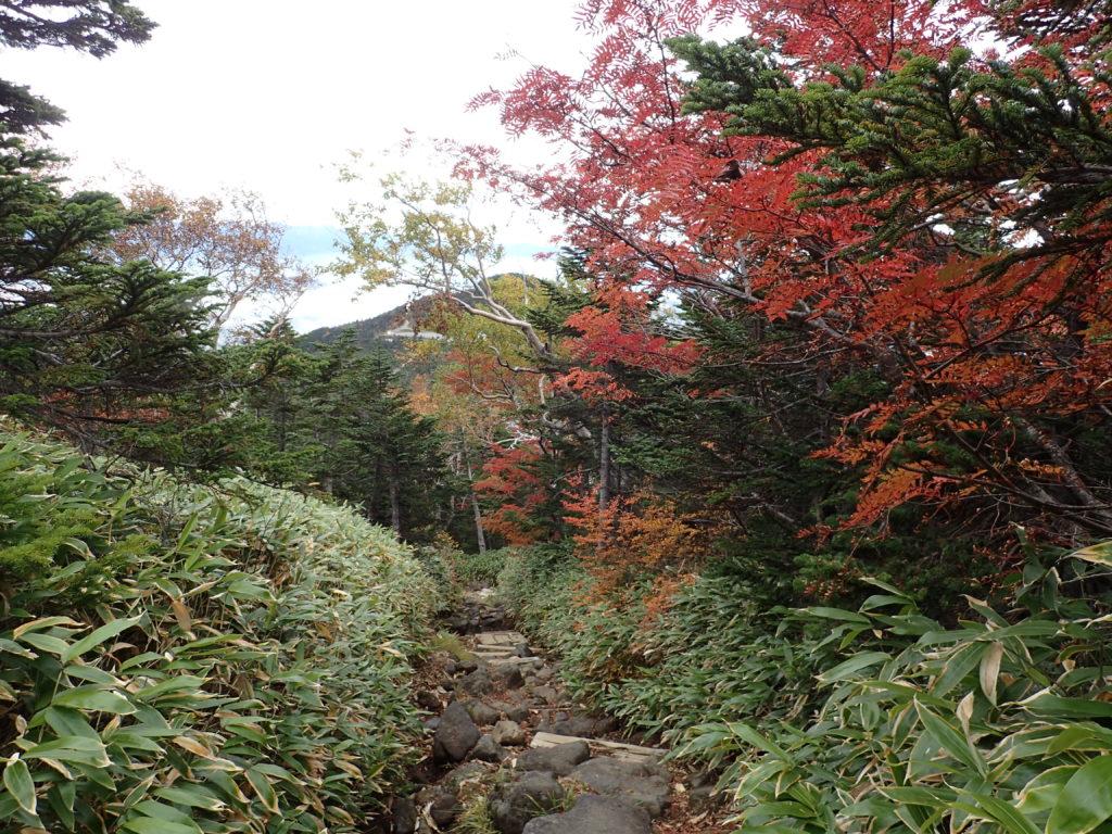 御嶽山の王滝ルートの紅葉