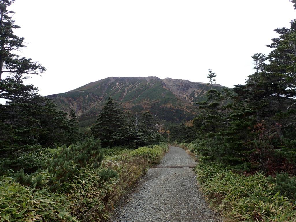 御嶽山の王滝口登山道