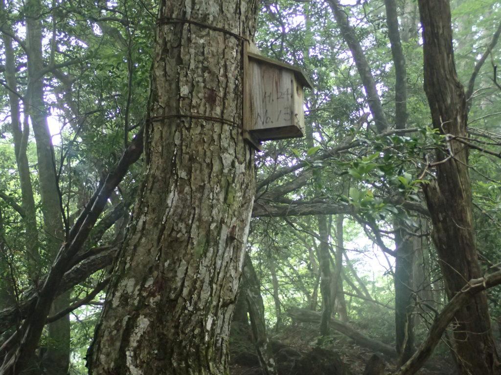 雲取山の鴨沢ルートにある鳥の巣箱