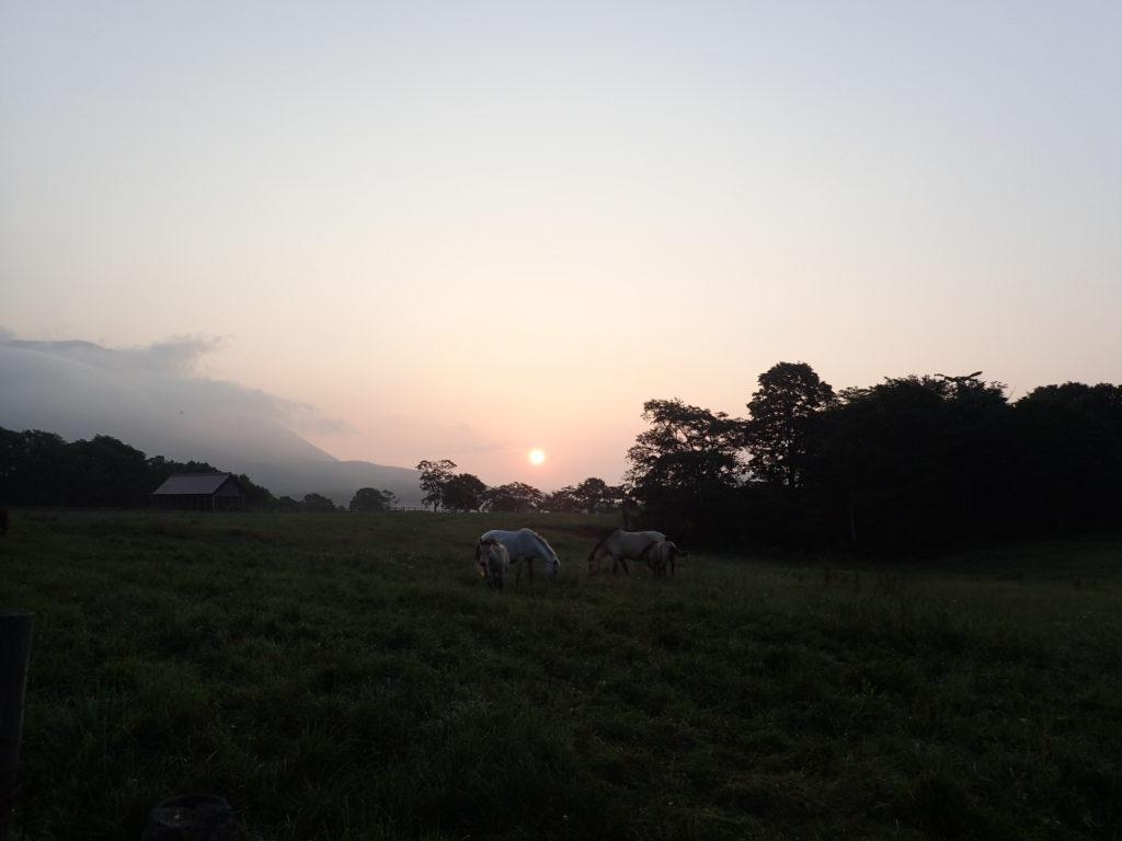 戸隠牧場の馬