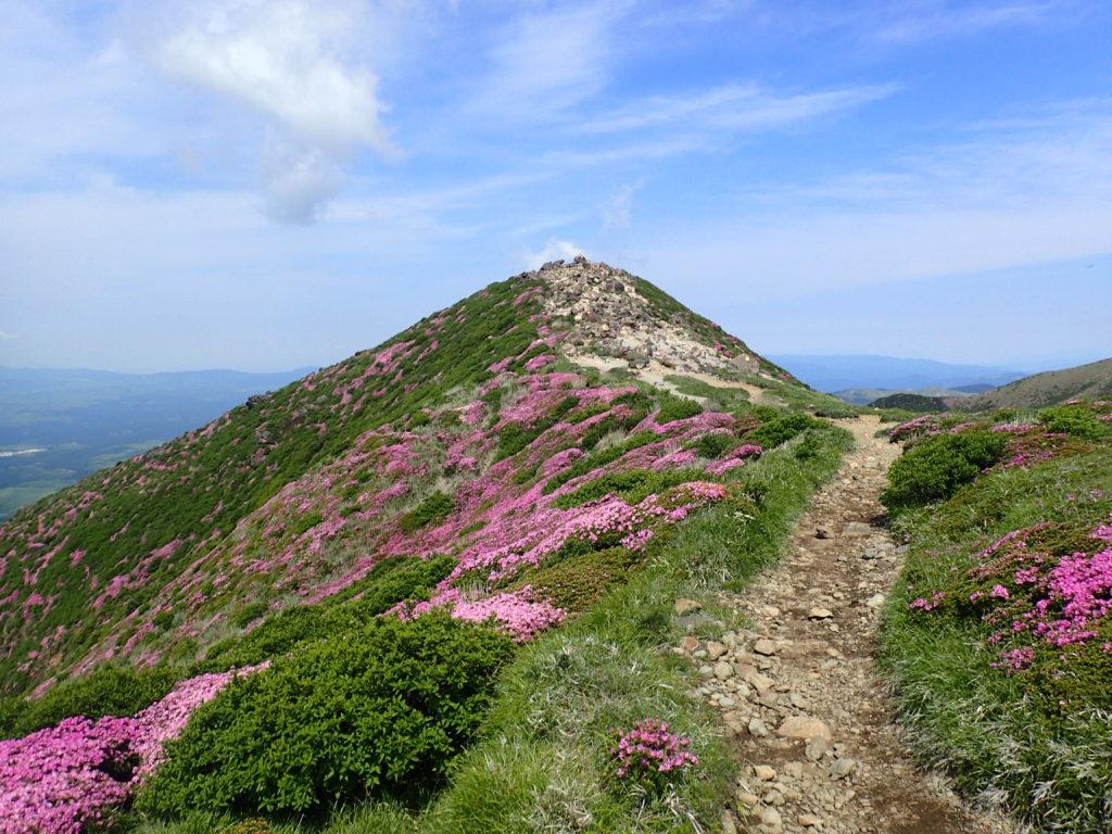 九重山(久住山)の山頂とミヤマキリシマ