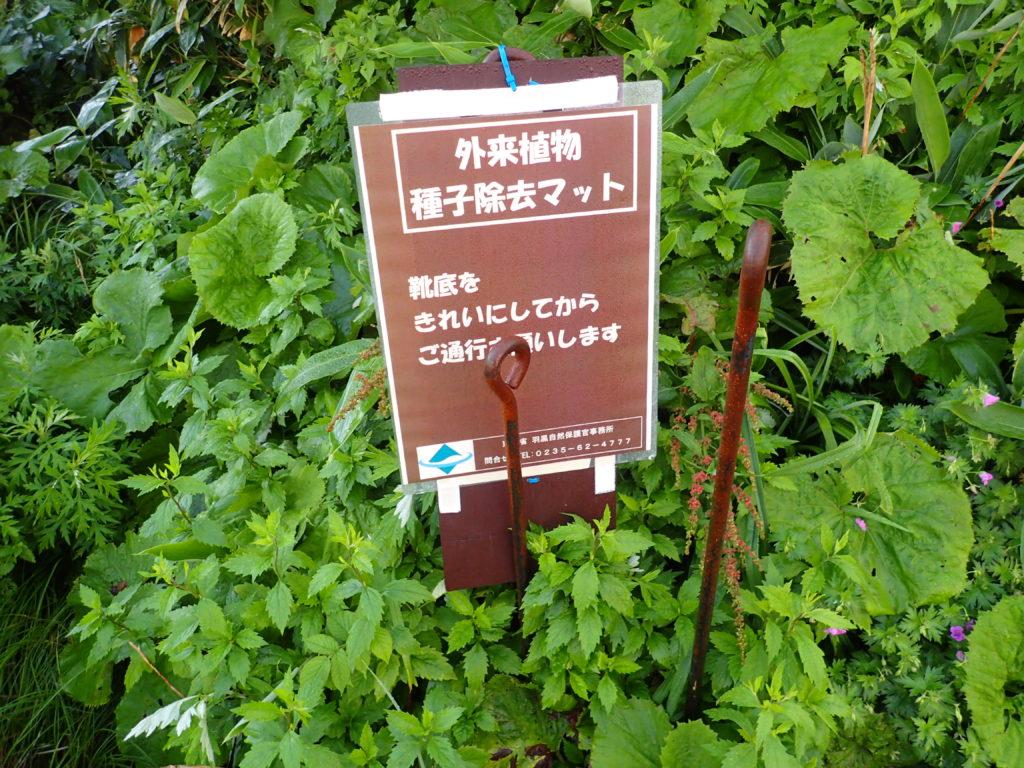 月山8合目登山口の外来植物種子除去マット