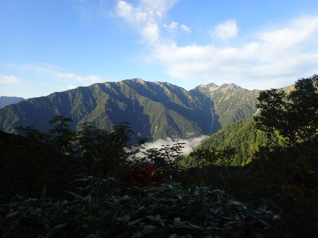爺ヶ岳柏原新道から見る蓮華岳と針ノ木岳