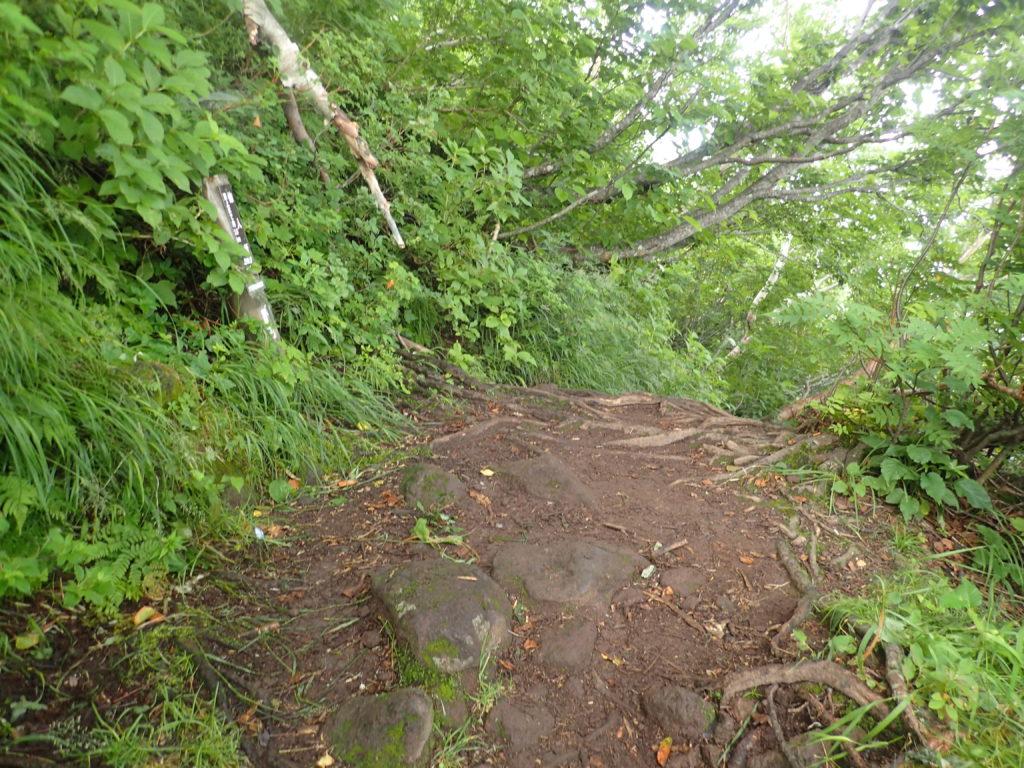 羅臼岳の岩尾別ルートの仙人坂