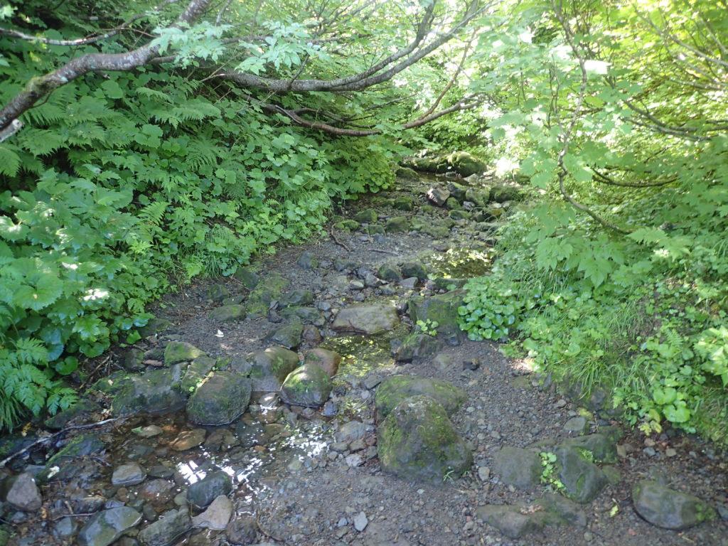 羅臼岳登山道の銀冷水(水場)