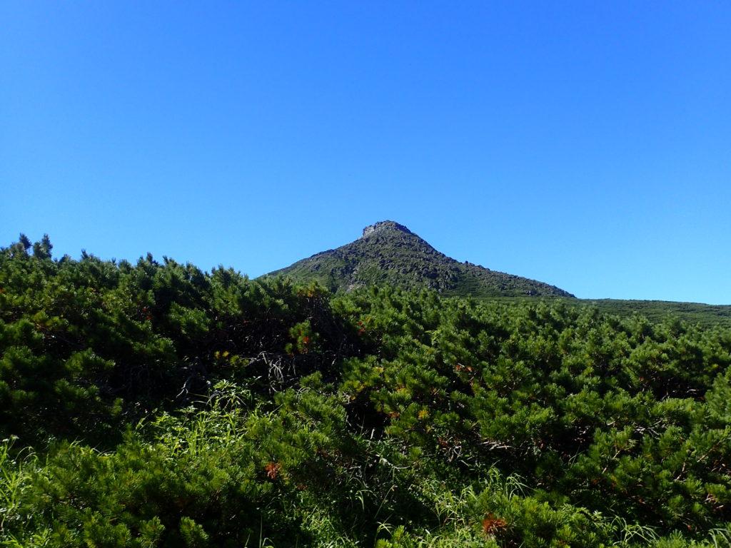 羅臼平付近から見る羅臼岳山頂