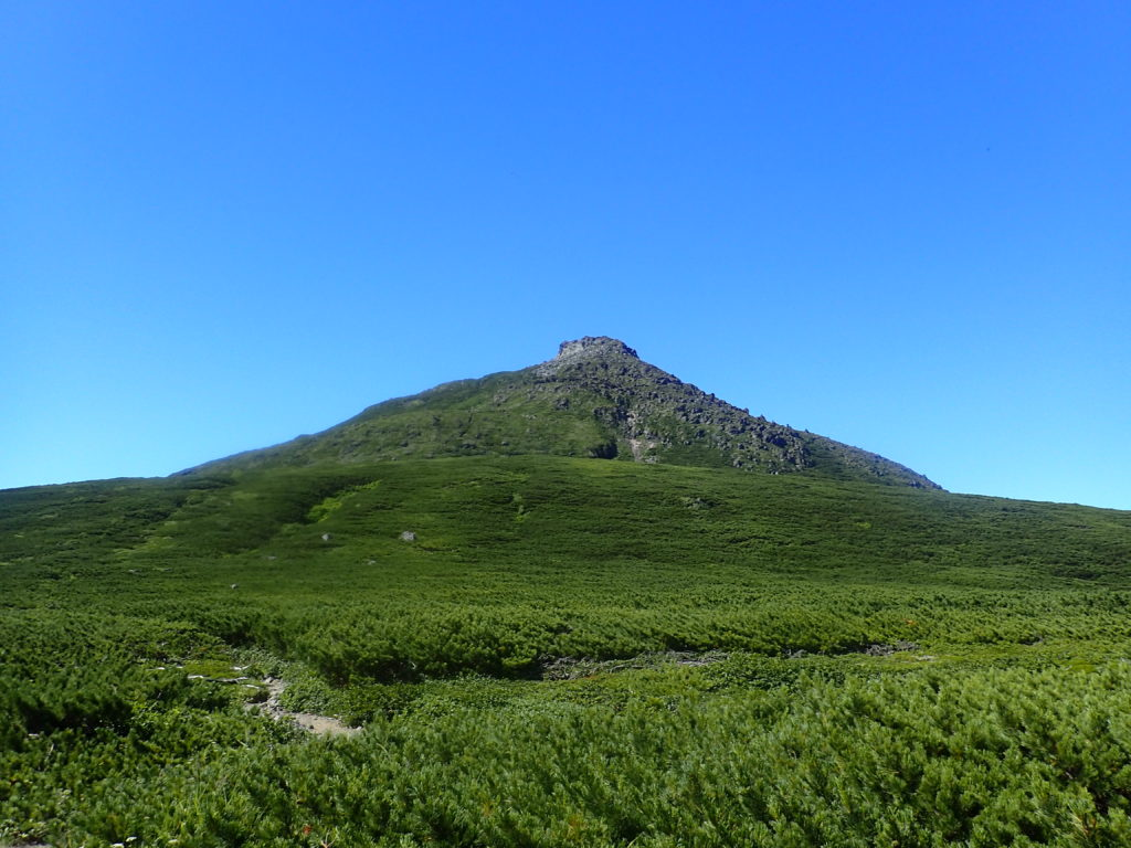 羅臼平付近から見た羅臼岳山頂