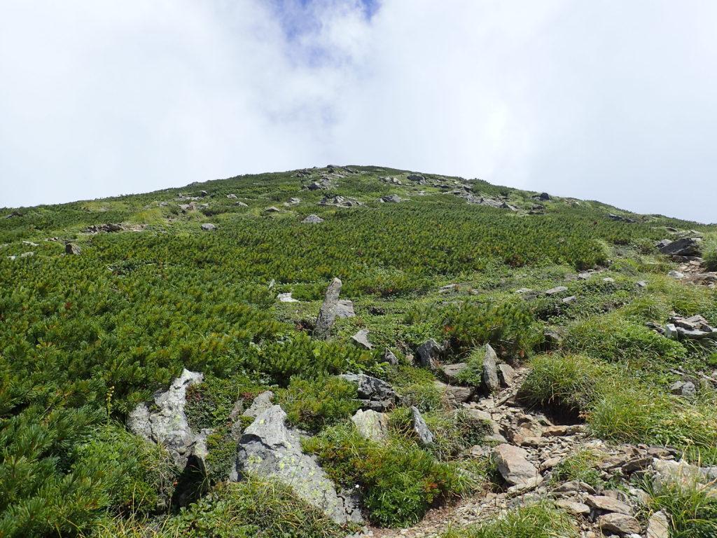 戸蔦別岳の山頂直下の登り