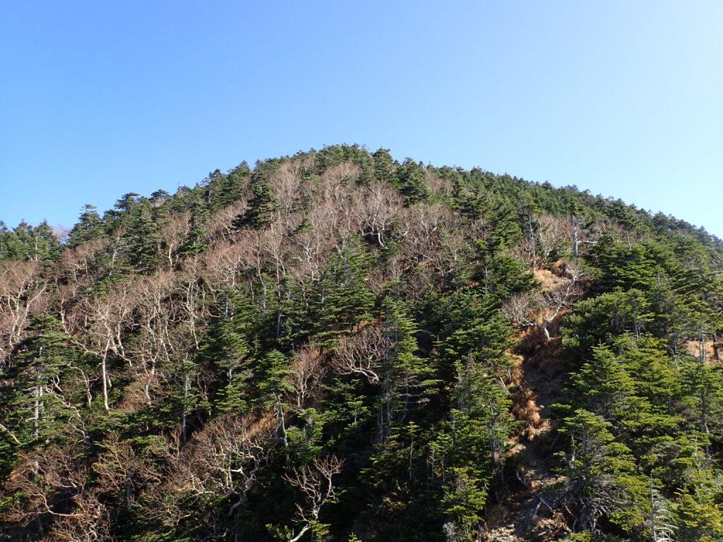 テカリ岩方向から見る光岳