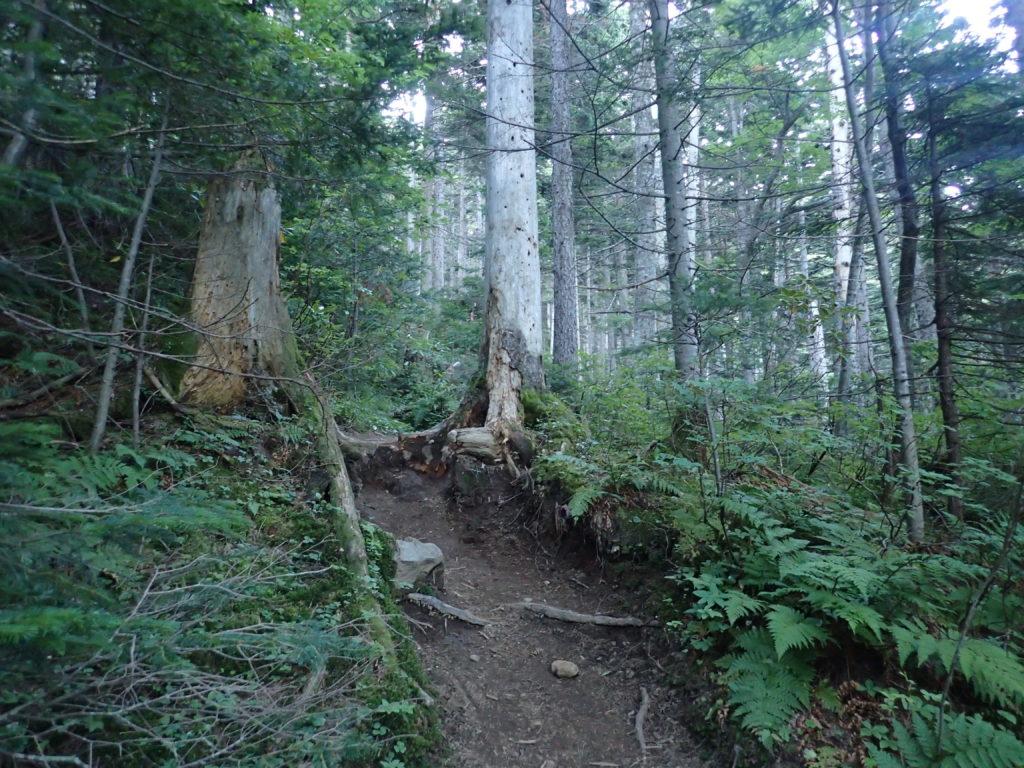雌阿寒岳のオンネトールート登山道