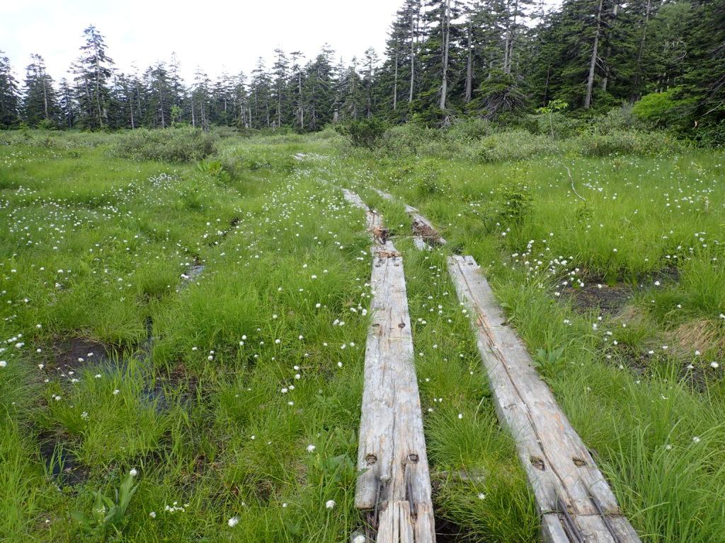 旭岳登山道の木道