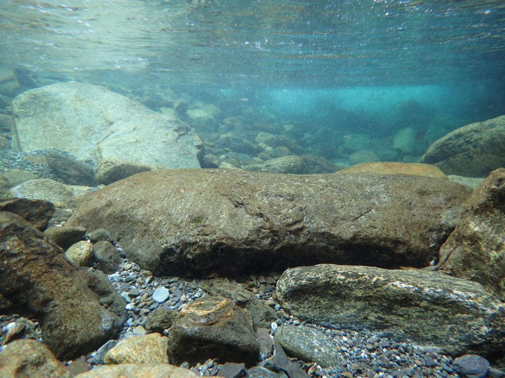 幌尻岳の振内ルートの糠平川の水中