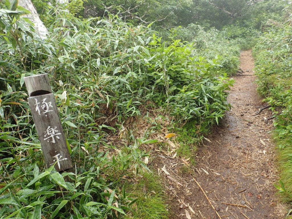 羅臼岳の岩尾別ルート登山道の極楽平