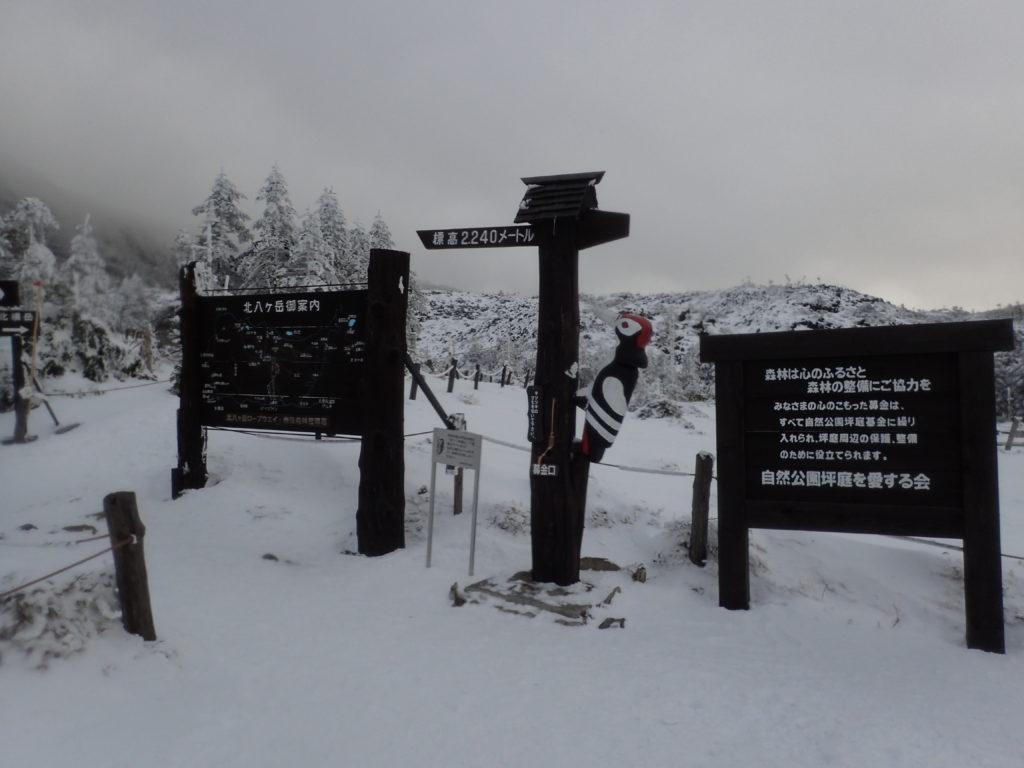 北八ヶ岳の坪庭の入口のキツツキ