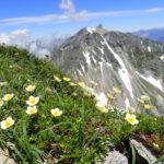 槍ヶ岳・大キレットの日帰り周遊登山の高山植物アルバム
