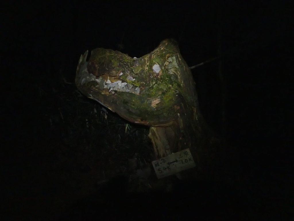 蝶ヶ岳に向かう暗闇の登山道でブラックダイヤモンドの登山用ヘッドライトであるストームの灯りで三股ゴジさんをライトアップ