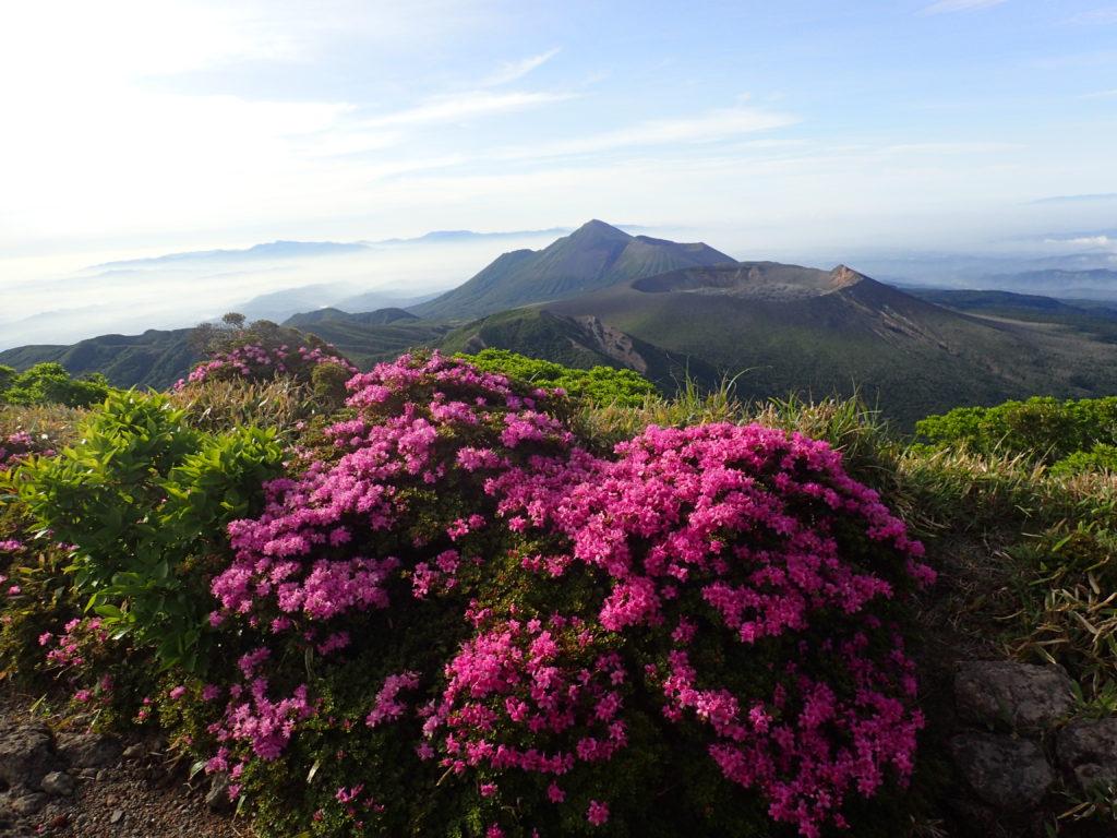 韓国岳山頂からミヤマキリシマの向こうに新燃岳と高千穂峰を撮影