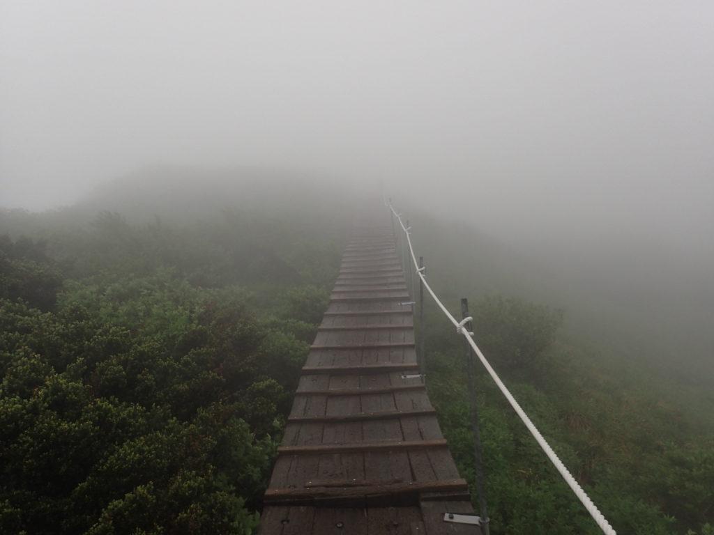 大山山頂の木道