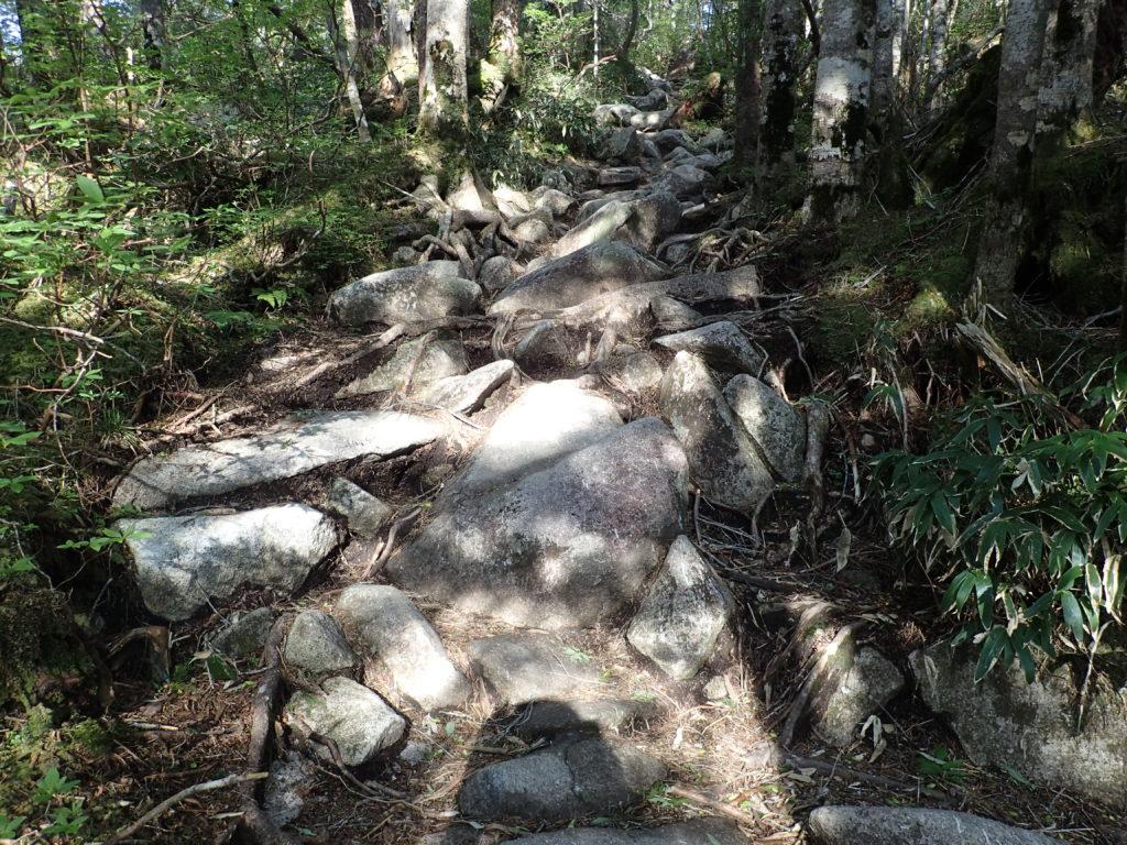 恵那山の広河原ルート登山道の様子