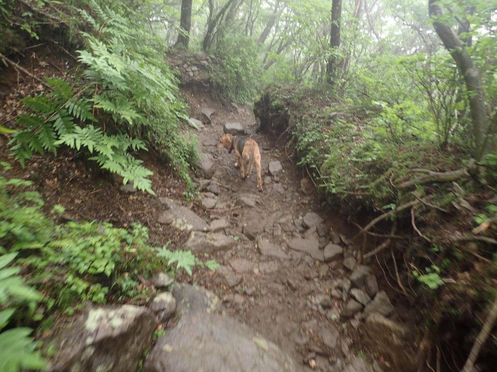 天城山登山で下山の時に遭遇した犬