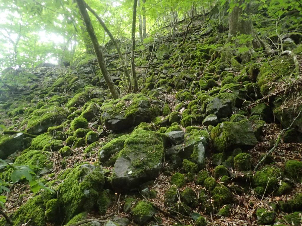 両神山日向大谷口ルート登山道の苔