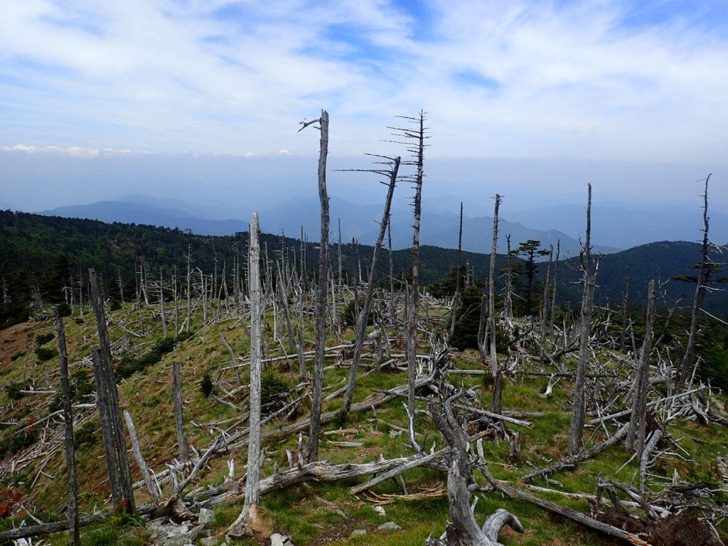 大峰山の八経ヶ岳山頂の枯れ木
