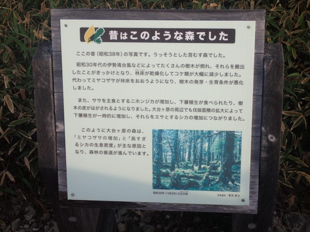 大台ヶ原山の森林についての説明