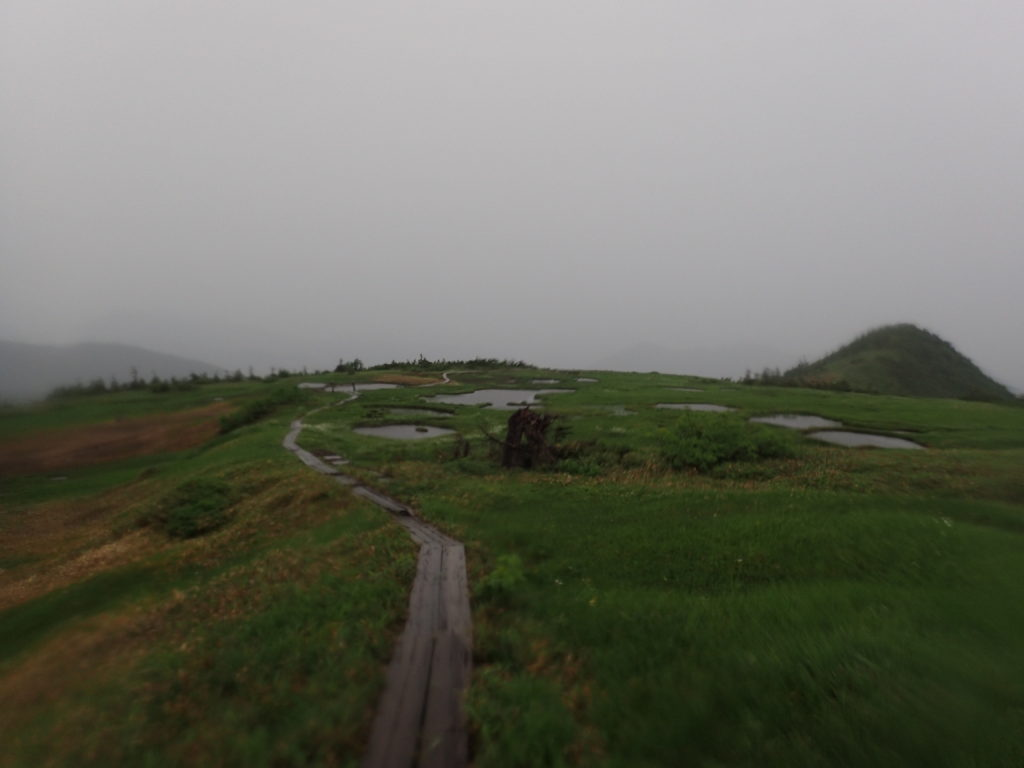 苗場山の高層湿原と木道