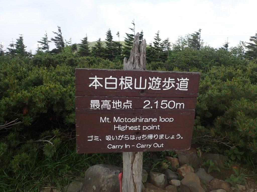 本白根山遊歩道の最高地点